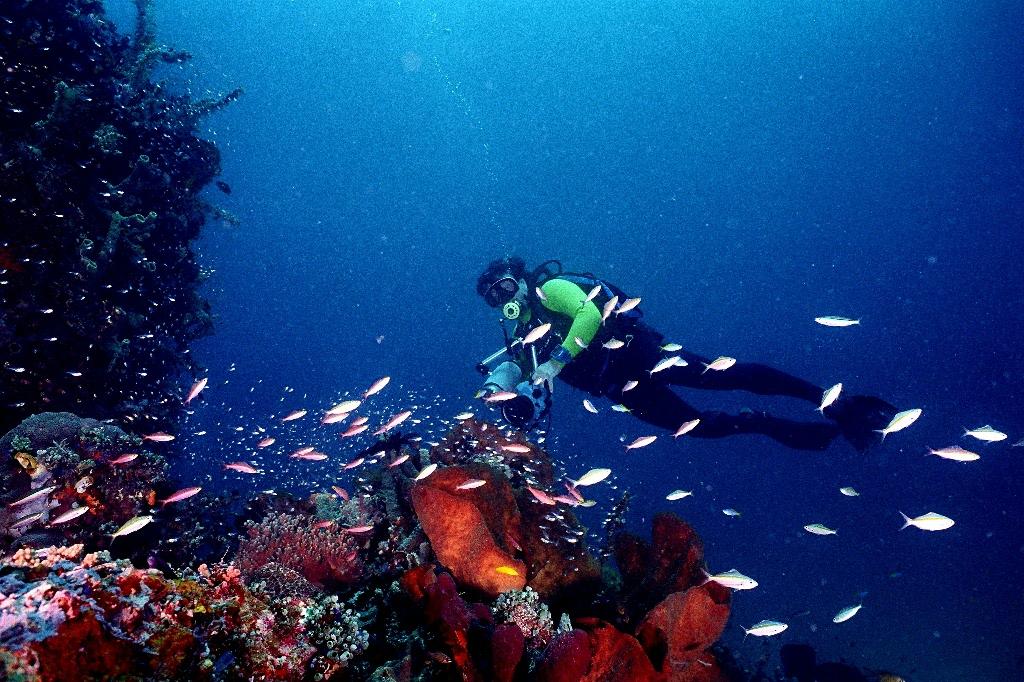 Taman Laut Bunaken Berita Terbaru Tips Trick Kruduk Yuks Kota