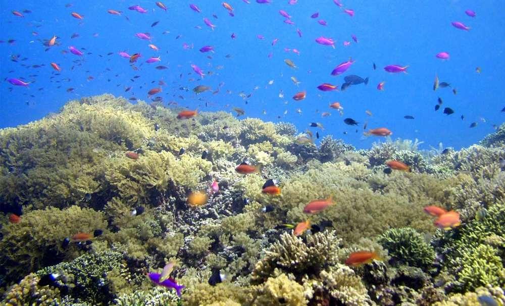 Taman Laut Bunaken Cocok Bagi Suka Menyelam Kesiniaja Nasional Kota