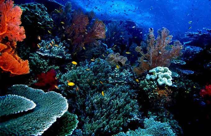 Taman Laut Bunaken Tempat Wisata Terpopuler Manado Kota
