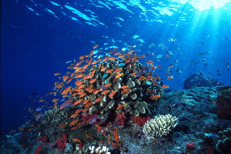 Taman Laut Bunaken Wisatapriangan Memiliki 20 Titik Penyelaman Kedalaman Bervariasi