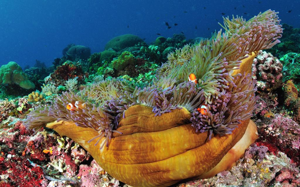 Taman Laut Nasional Bunaken Manado Kota