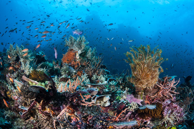 Taman Nasional Bunaken Indah Laut Sejarahnya Keindahan Terpancar Kota Manado
