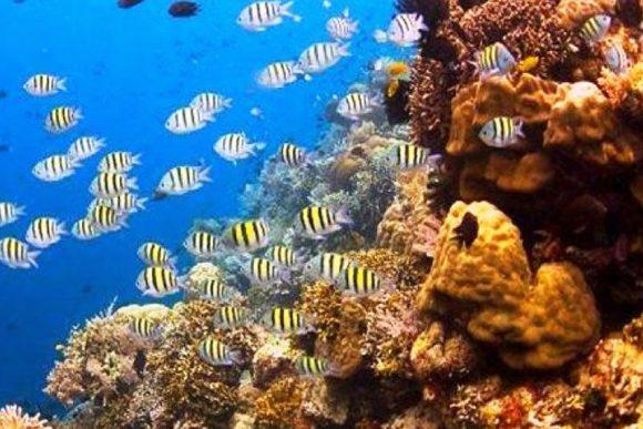 Taman Nasional Bunaken Info Tempat Wisata Manado Membuat Kota Dikenal