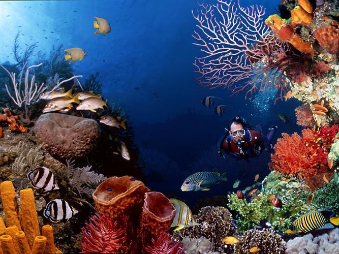 Taman Nasional Bunaken Laut Kota Manado