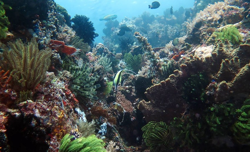 Taman Nasional Bunaken Laut Pertama Terbaik Eloknya Pemandangan Diveplanit Kota