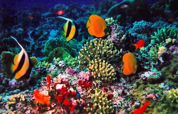 Taman Nasional Bunaken Manado Siwisatawan Bawah Hamparan Laut Seluas 890