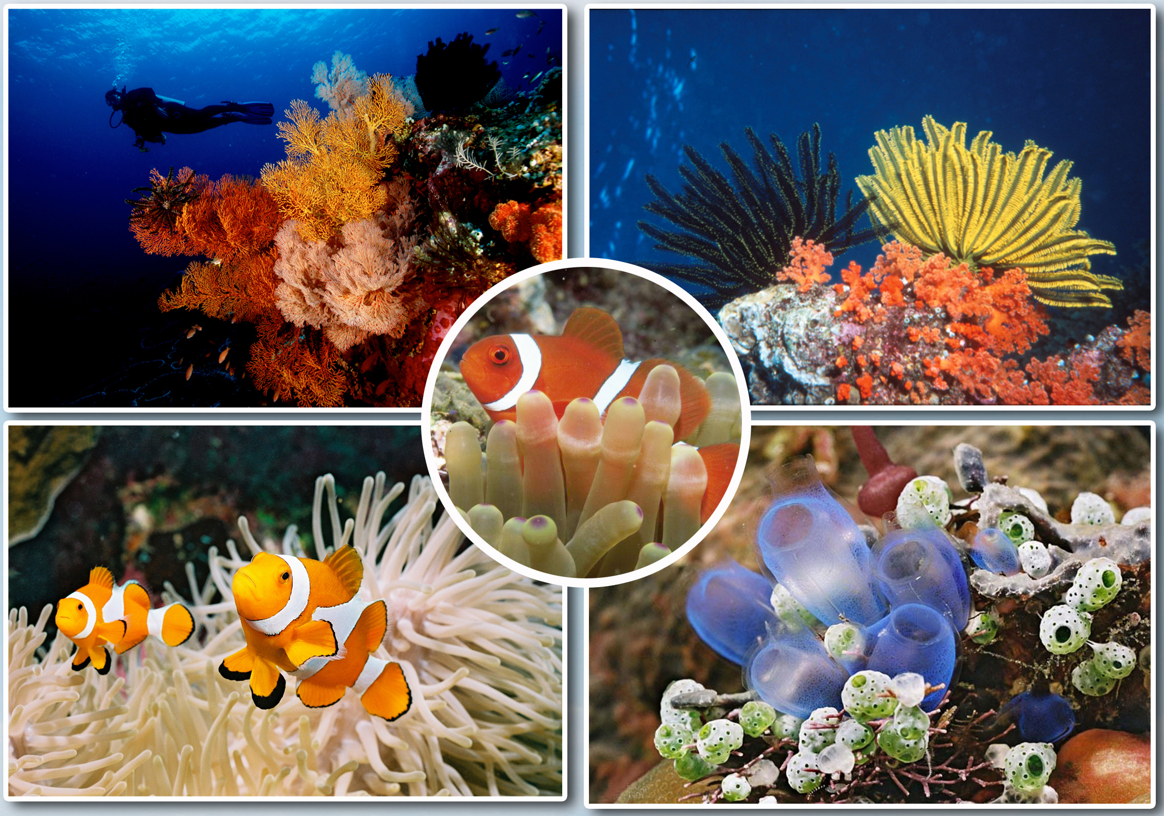 Wisata Taman Laut Bunaken Surga Bagi Ikan Terumbuh Karang Kota