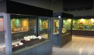 Museum Negeri Nusa Tenggara Barat Direktori Online Indonesia Koleksi Kota