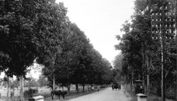 Pesona Wisata Mataram Jalan Raya Antara Ampenan 1925 Jpg Fit