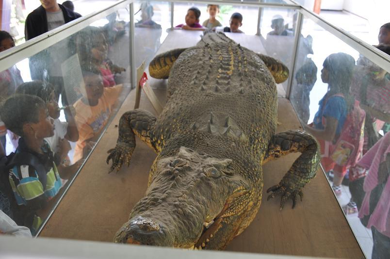 Visit Ntb Museum Rent Bike Lombok Crocodile Find Room Paintings