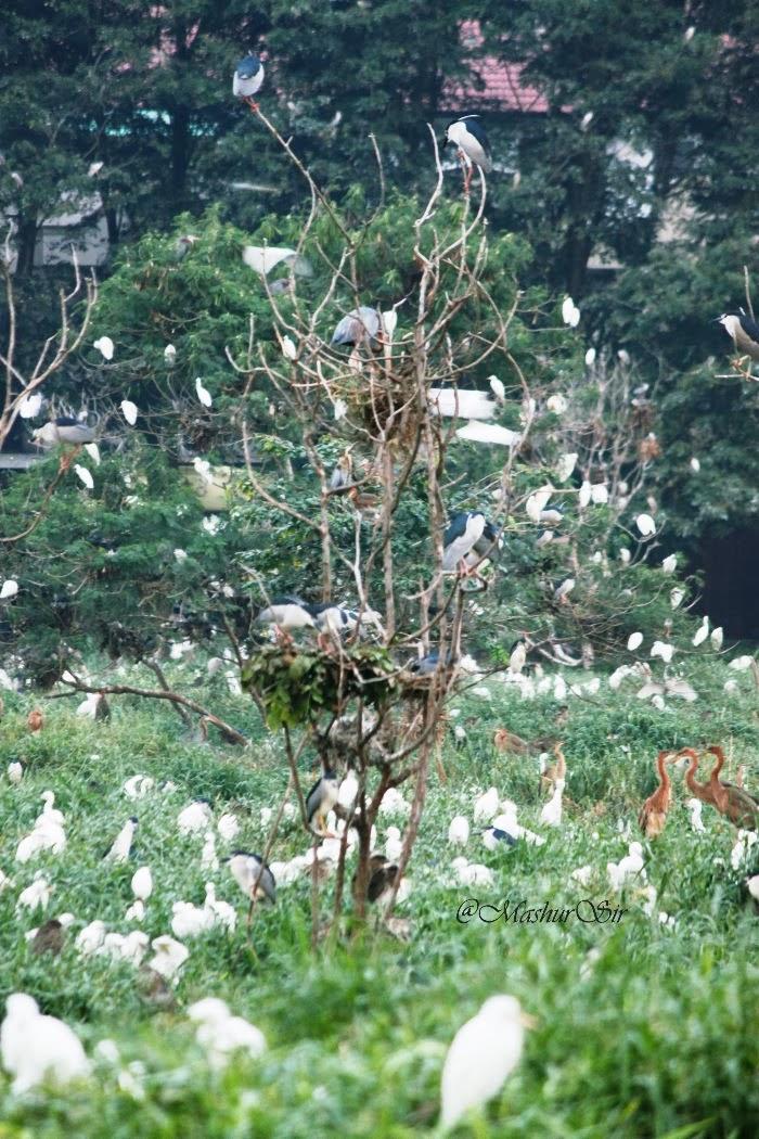 Kerajaan Bangau Cemara Asri Kota Medan Lifeisastoryofjourney Komplek Berada Meski