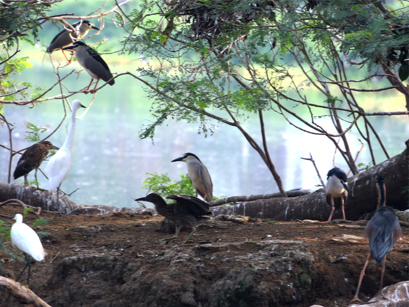 Sedikit Oleh Medan Zubairi Djoerban Ribuan Koloni Burung Beterbangan Mencari