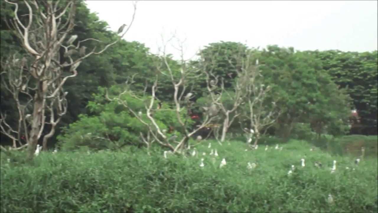 Taman Burung Cemara Asri Medan Sumatera Utara Youtube Kota