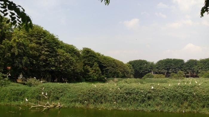 Taman Burung Cemara Asri Rumah Singgah Bagi Ribuan Kota Dibuka