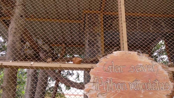 Taman Burung Cemara Asri Rumah Singgah Bagi Ribuan Kota Tempat