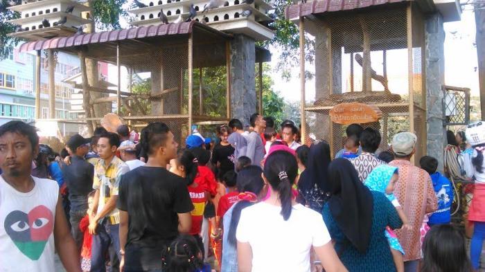 Warga Habiskan Melihat Ular Cemara Asri Kota Medan