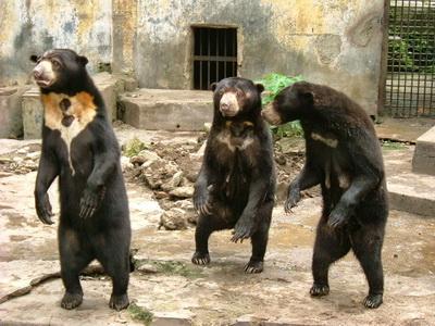 10 Gambar Kebun Binatang Medan Zoo Harga Tiket Masuk Lokasi