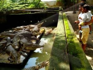 Aceh Forest Kebun Binatang Terletak Jalan Bunga Raya Kecamatan Medan