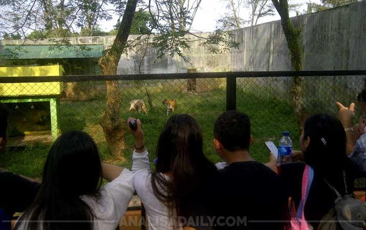Berita Kebun Binatang Medan Jadi Primadona Analisadaily Kota