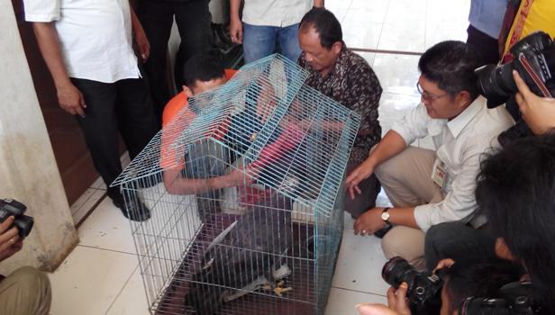 Elang Hitam Kebun Binatang Medan Dinamika Rakyat Kota