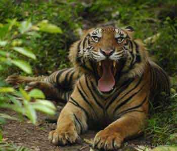 Harga Tiket Masuk Kebun Binatang Medan 2016 Kota
