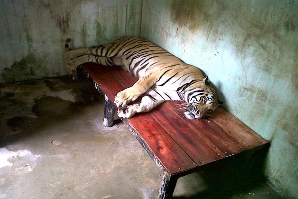 Kebun Binatang Indonesia Dinilai Tempat Pembunuhan Satwa Mongabay Salah Satu