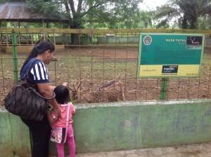 Kebun Binatang Medan Dipadati Ribuan Pengunjung Tobasatu Tempat Rekreasi Murah