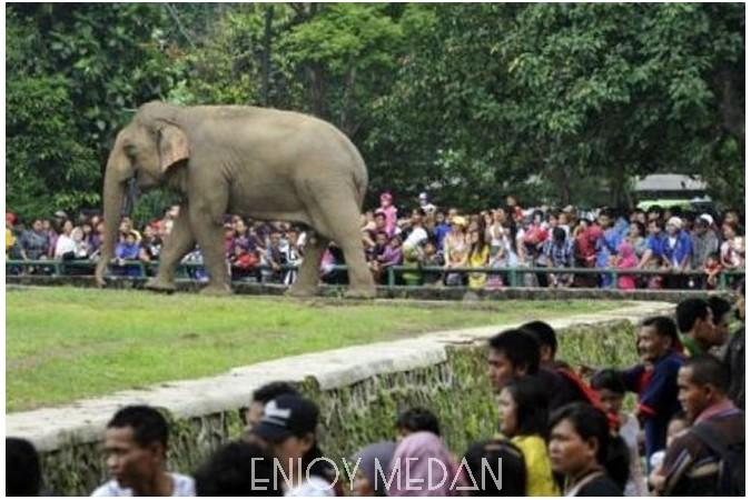 Kebun Binatang Medan Enjoy Kota