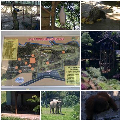 Kebun Binatang Medan Kusmayadi Sumawijaya Kota