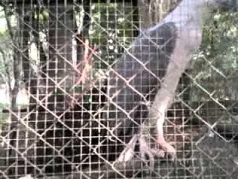 Kebun Binatang Medan Mp4 Youtube Kota