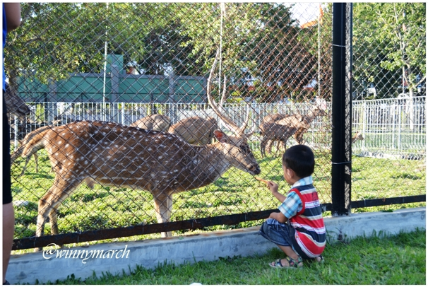 Kebun Binatang Medan Winny Marlina Kota