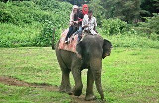 Kebun Binatang Medan Zoo Tempat Wisata Pinterest Kota