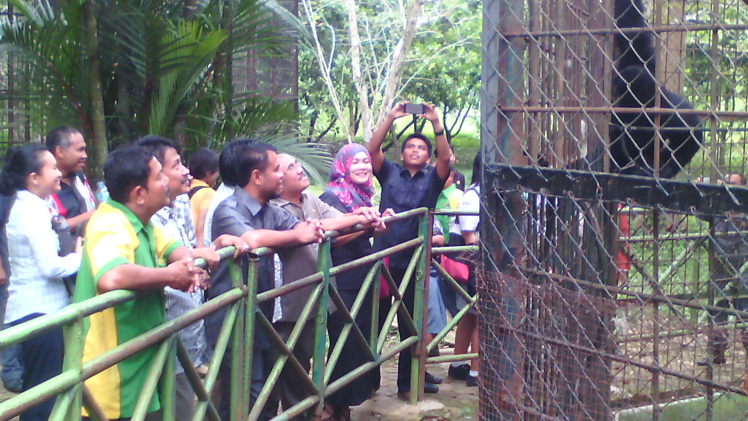 Medan Zoo Nasibmu Perlu Sentuhan Investasi Jurnal Asia Hariman Harimau