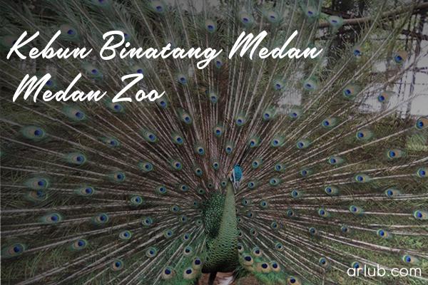 Midnight Diary Arlub Kebun Binatang Medan Zoo Jangan Oke Kita