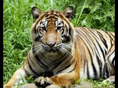 Misteri Keindahan Kebun Binatang Medan Zoo Youtube Kota