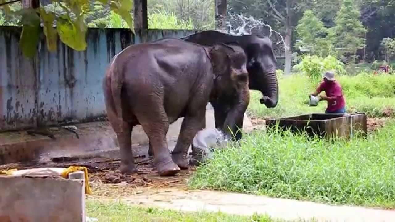 Mutia Rahma Mengunjungi Kebun Binatang Medan Youtube Kota