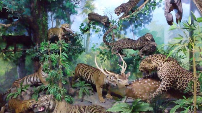 Rahmat Gallery Medan Koleksi 2 000 Binatang Museum Satwa Pertama