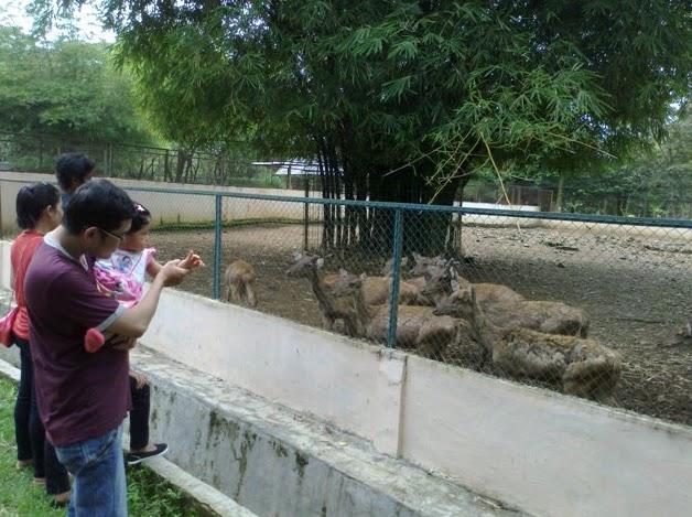 Story Medan Zoo Sumber Http Griyawisata Index Php 2011010323226 Sumatera