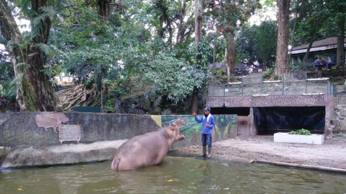 Taman Hewan Pematang Siantar Bersih Lebih Lengkap Kebun Binatang Medan