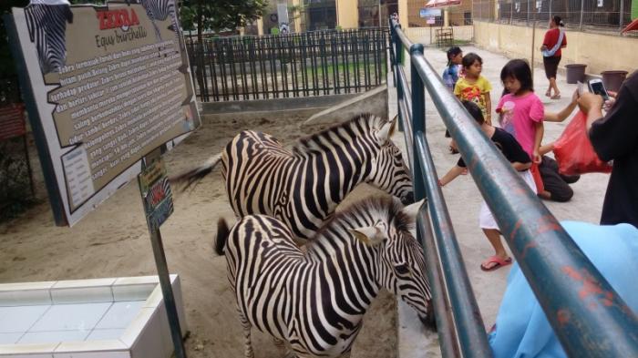 Taman Hewan Pematang Siantar Bersih Lebih Lengkap Kebun Koleksi Tempat