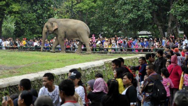 Tempat Wajib Dikunjungi Medan Nyindirnyandar Kebun Binatang Berada Jalan Jl