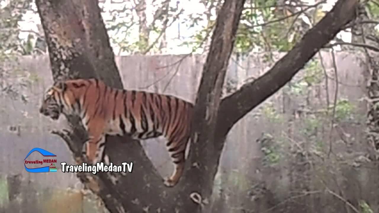 Tempat Wisata Medan Zoo Kebun Binatang Youtube Kota