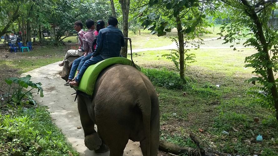 Tingkatkan Kepuasan Pengunjung Medan Zoo Tambah Koleksi Singa Menaiki Gajah