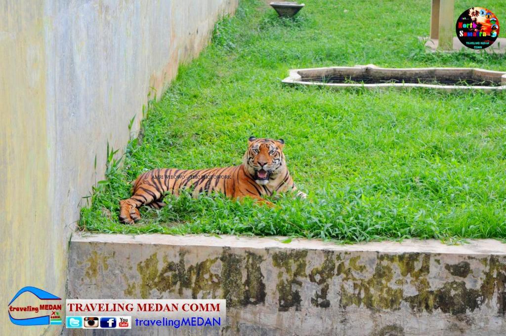 Wisata Keluarga Medan Zoo Pariwisata Sumut Kura Ular Rusa Monyet