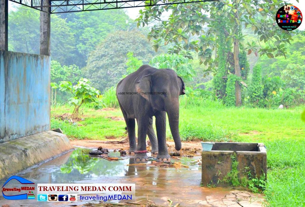Wisata Keluarga Medan Zoo Pariwisata Sumut Net Salah Satu Tempat