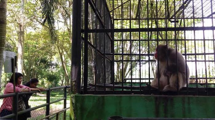 Wisata Tracking Jungle Kebun Binatang Medan Capek Tapi Puas Wisatawan