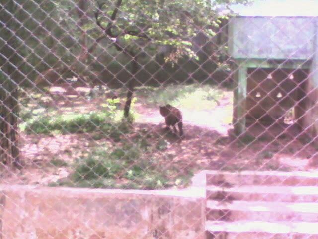 Wisatamedanbung Wisata Kebun Binatang Simalingkar Medan Harimau Taman Hewan Kota