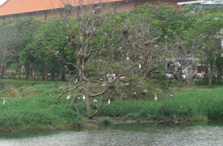Melihat Maha Vihara Maitreya Sudut Kota Medan Wisata Kolam Burung
