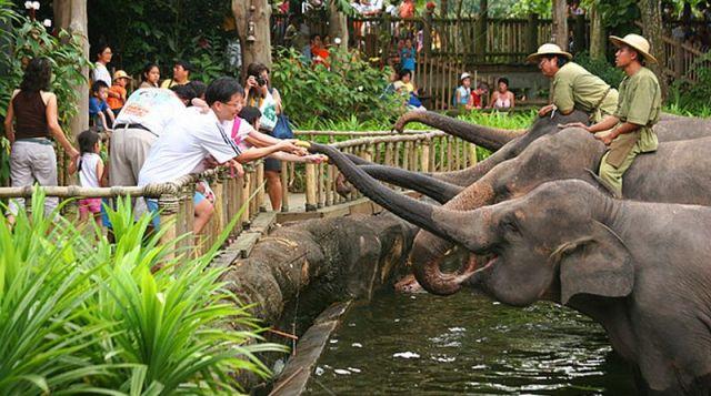 25 Tempat Wisata Medan Sekitarnya Patut Kamu Kunjungi Zoo Terletak