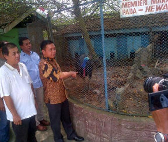 Temuan Satwa Dilindungi Hairos Mora Indah Poldasu Satwanya Foto Gibson